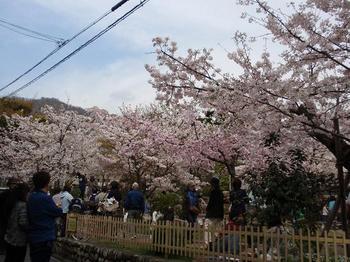 コンデジ 074桜守公園.jpg